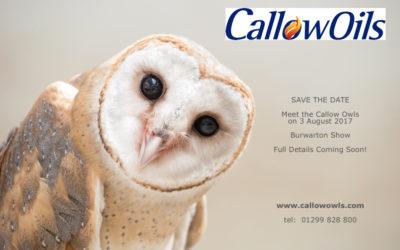 Meet the Callow Owls