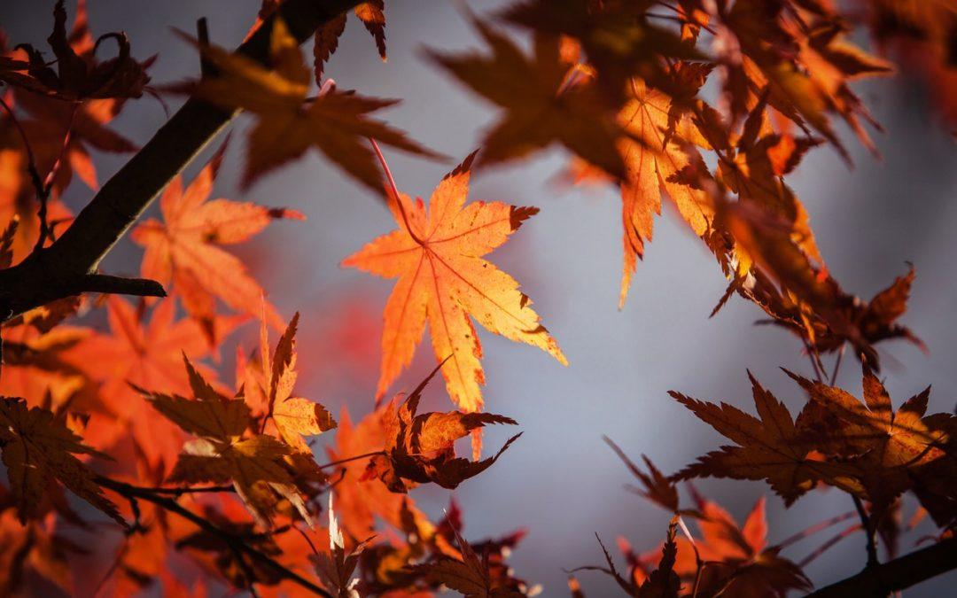 Prepare Your Home For Autumn